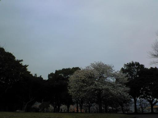c0097620_20122212.jpg
