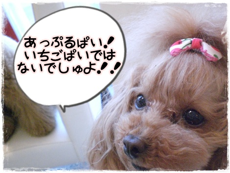 あっぷるぱいのおはなし_b0084929_17331590.jpg