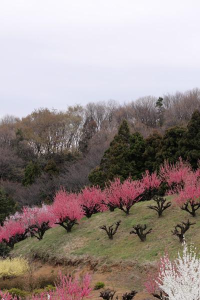 元気を出して。春はすぐそこ_b0098139_22224119.jpg