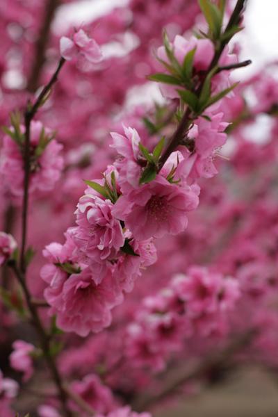 元気を出して。春はすぐそこ_b0098139_2224852.jpg