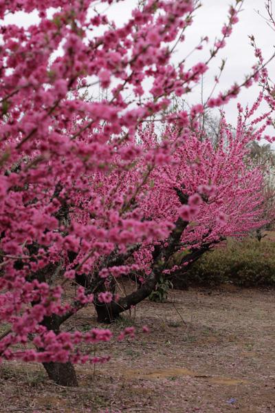 元気を出して。春はすぐそこ_b0098139_22255367.jpg