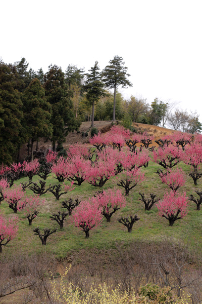 元気を出して。春はすぐそこ_b0098139_2316696.jpg