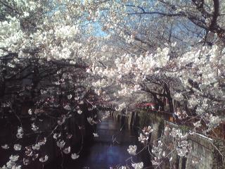 春うらら♪_c0076939_16215168.jpg