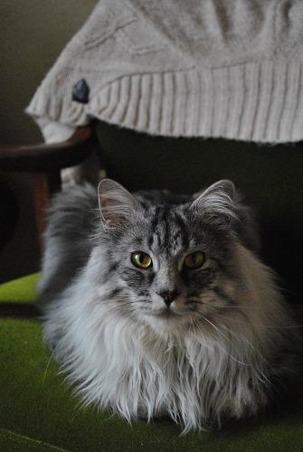 ジャンボ猫がやって来た!!_e0159050_18245671.jpg