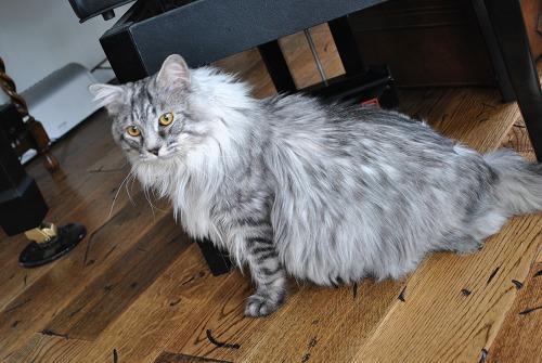 ジャンボ猫がやって来た!!_e0159050_18284943.jpg