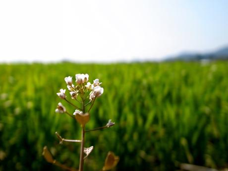 フォトギャラリー♯17 『春は南から』 【2】_e0071652_10351961.jpg