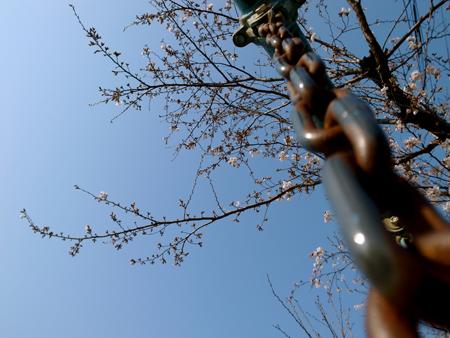 フォトギャラリー♯17 『春は南から』 【2】_e0071652_1041965.jpg