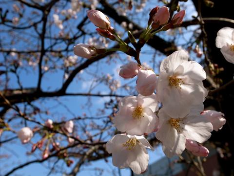 フォトギャラリー♯17 『春は南から』 【1】_e0071652_653718.jpg
