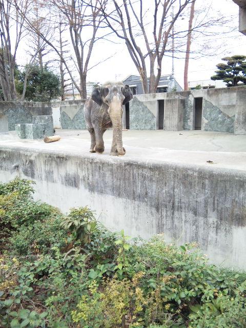 久しぶりに井の頭文化園へ行ってきた。_b0126653_11184820.jpg