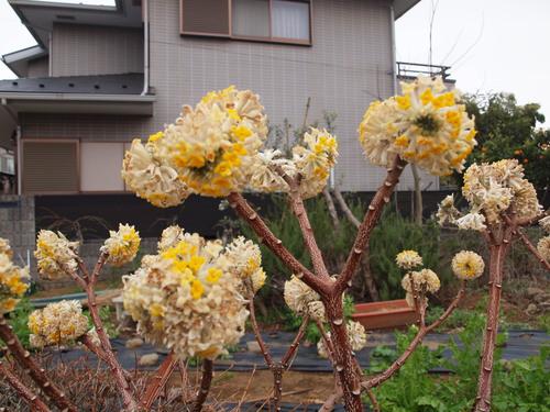 和田堀公園の桜_e0232277_9465132.jpg