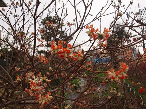 和田堀公園の桜_e0232277_9473831.jpg