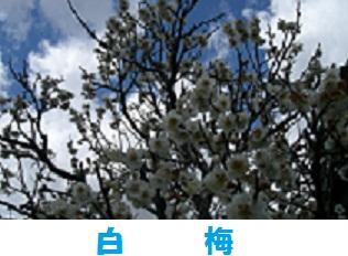 d0165579_162578.jpg