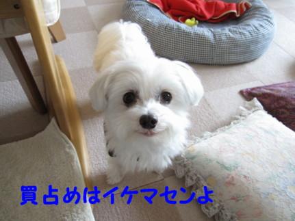 b0193480_10594497.jpg