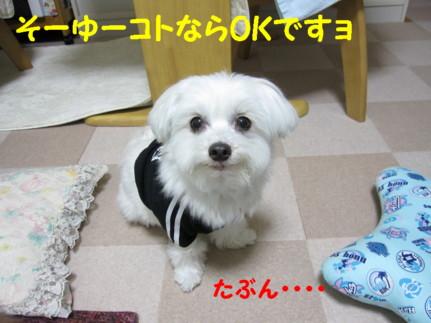 b0193480_1134871.jpg