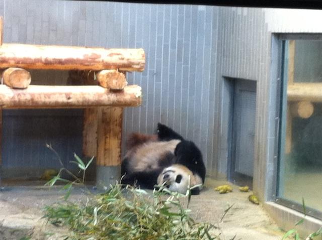 上野動物園のパンダは今日がお勧めです_b0206085_11501267.jpg