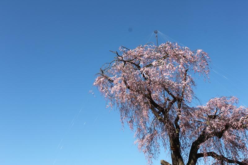 円山公園・SAKURA_d0217090_22494359.jpg
