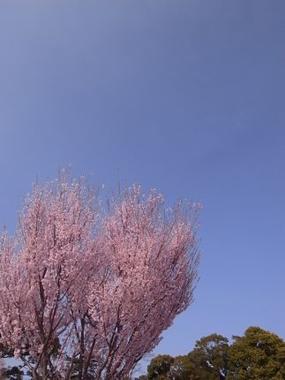 Sakura*Sakura_c0212911_0452241.jpg