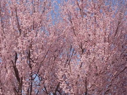 Sakura*Sakura_c0212911_0505643.jpg