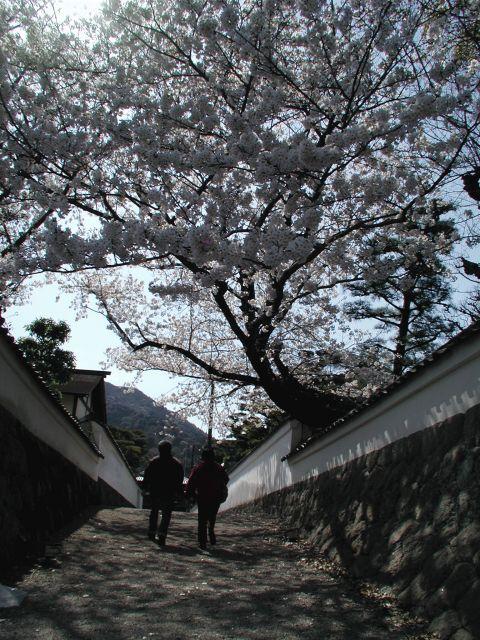 五十鈴川の桜_e0149215_18421733.jpg