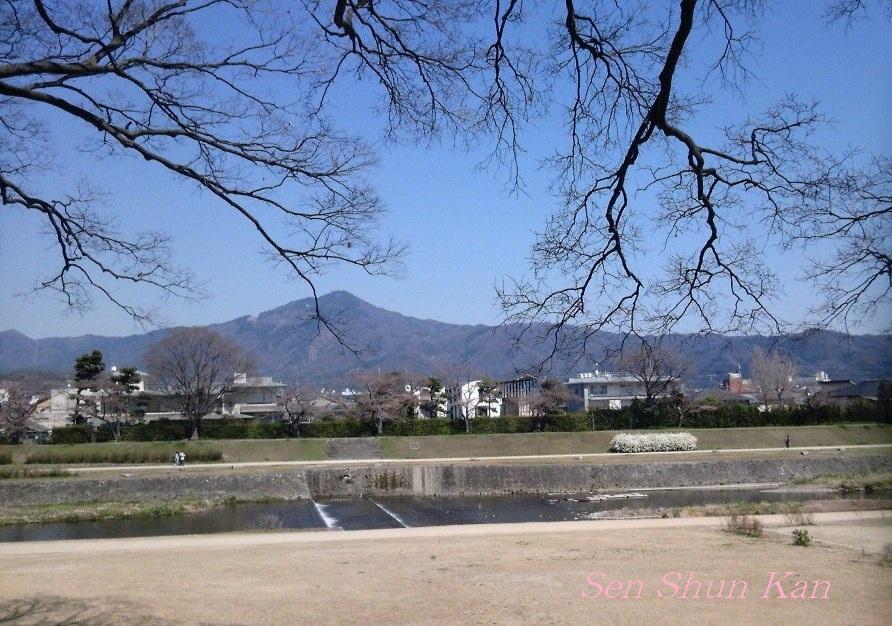 賀茂川の桜_a0164068_23533126.jpg