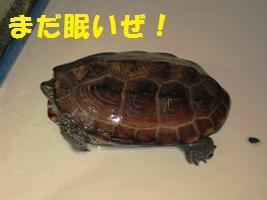 d0140668_1751290.jpg
