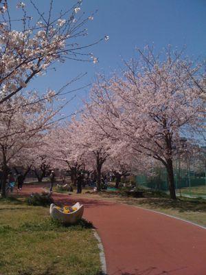 お花見_a0077071_219625.jpg
