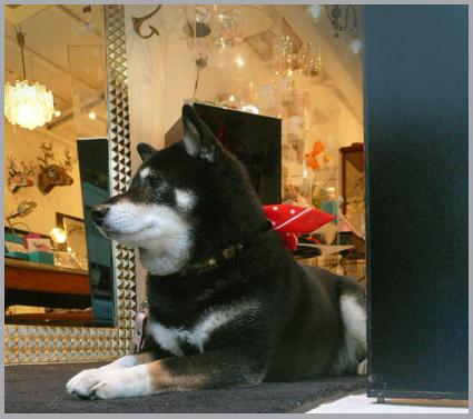 青山・骨董通りグラディスカでプレゼント。_e0236072_22213047.jpg
