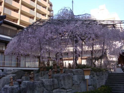 桜(その③)_f0201286_1651317.jpg