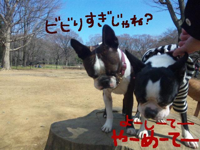 オワリはじまり★地震の日のコト_d0187891_0582250.jpg