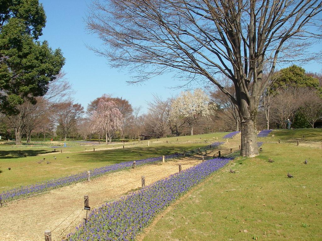 記念公園通信_b0172896_13510100.jpg