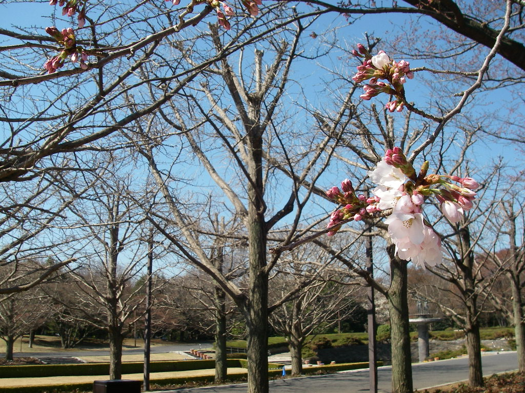 記念公園通信_b0172896_1352492.jpg