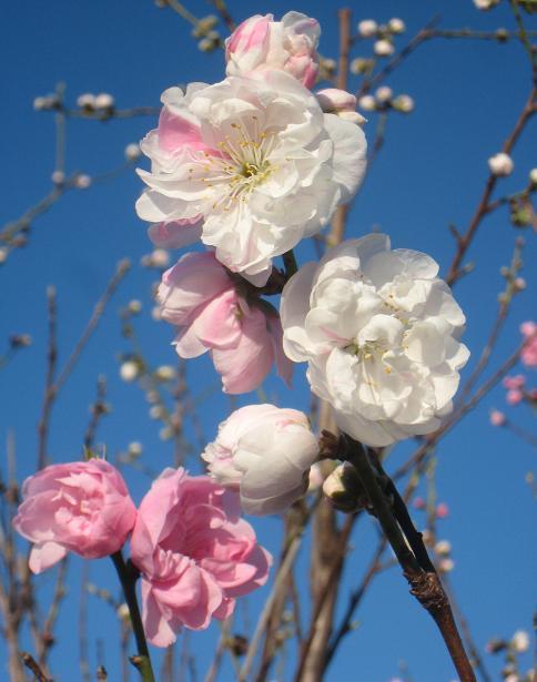花もも_c0119197_9383020.jpg
