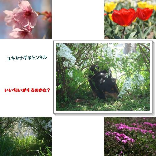 f0118400_11403440.jpg
