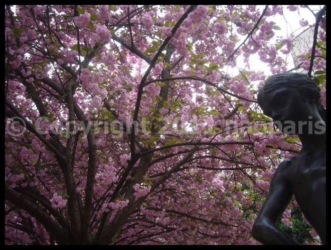 【サクラ】4月4日RUE DE SEINE PARIS_a0008105_19145092.jpg
