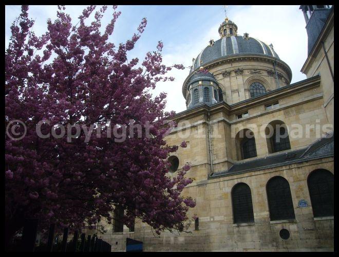 【サクラ】4月4日RUE DE SEINE PARIS_a0008105_19172541.jpg