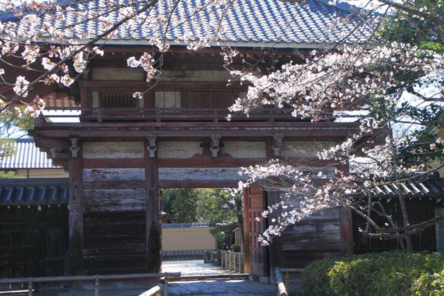 京の花だより 本法寺_e0048413_2392911.jpg