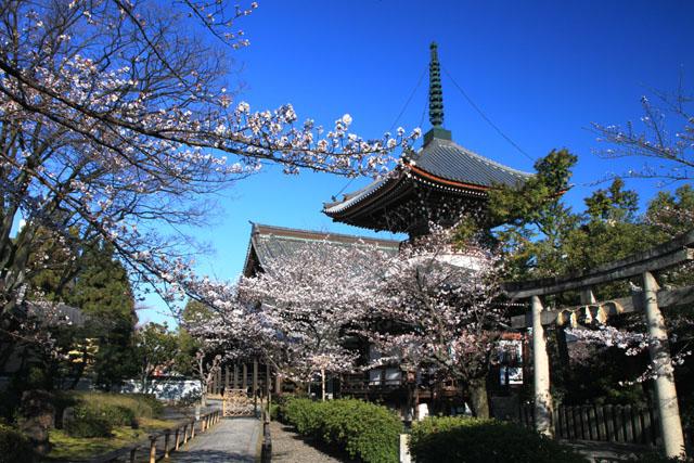 京の花だより 本法寺_e0048413_2394259.jpg