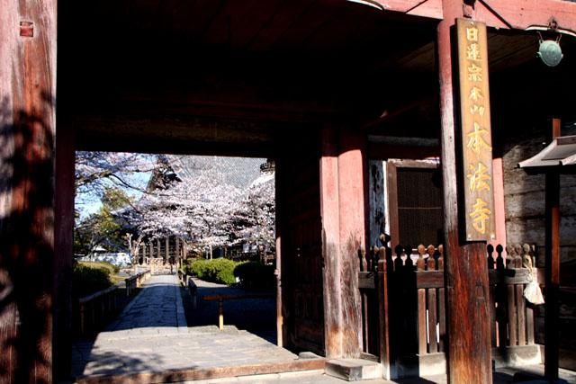 京の花だより 本法寺_e0048413_239483.jpg