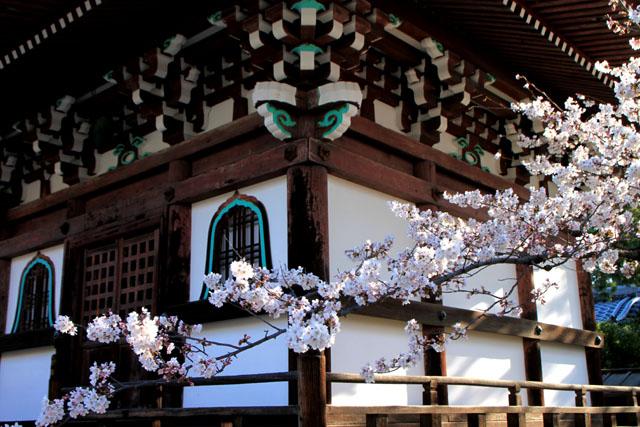 京の花だより 本法寺_e0048413_2395384.jpg