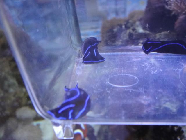 海水魚・サンゴ_f0189122_1311378.jpg