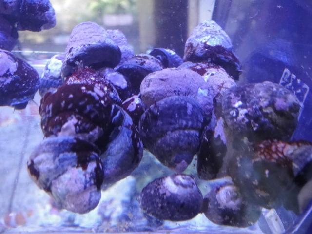 海水魚・サンゴ_f0189122_13122615.jpg