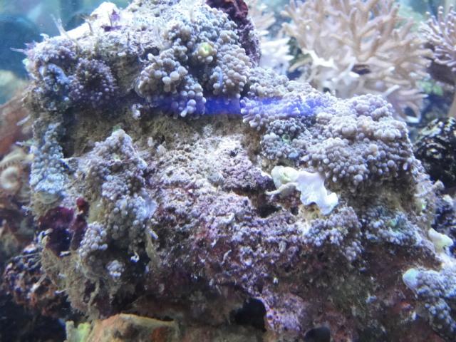 海水魚・サンゴ_f0189122_13132737.jpg
