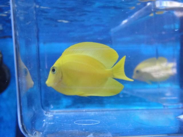 海水魚・サンゴ_f0189122_1345296.jpg