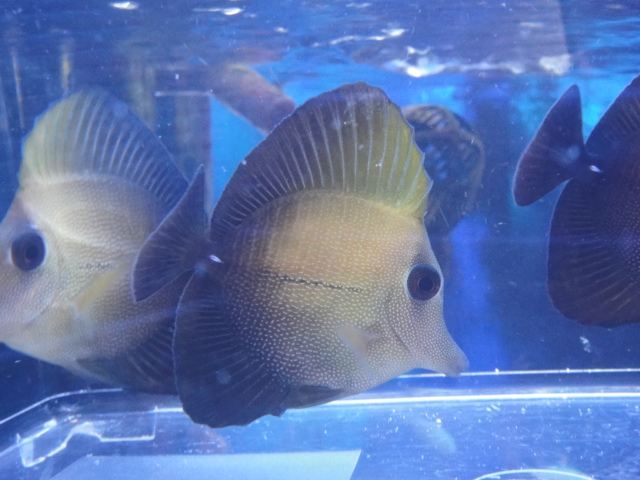 海水魚・サンゴ_f0189122_1361441.jpg