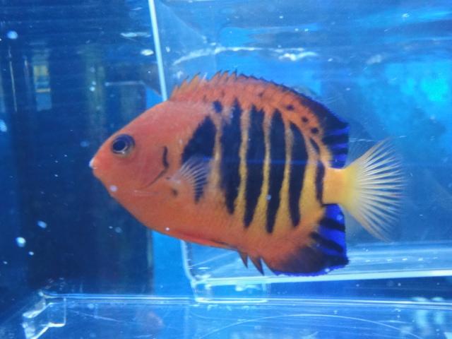 海水魚・サンゴ_f0189122_137588.jpg