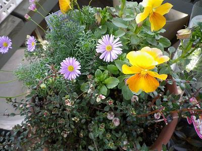 いよいよ春が・・・_e0086738_13364396.jpg