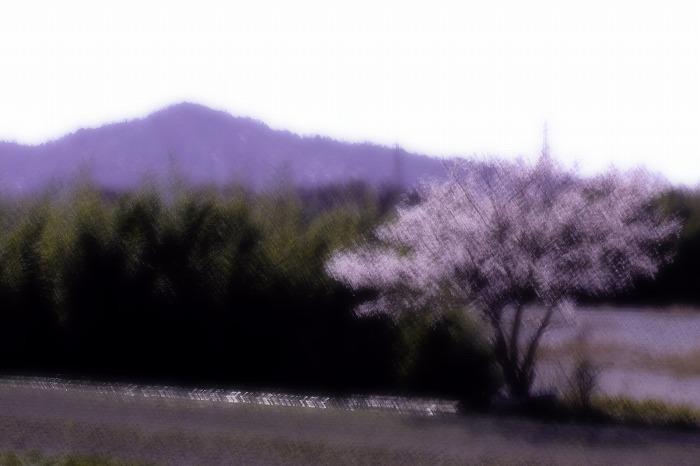 桜絵巻・・・_b0168041_19483381.jpg