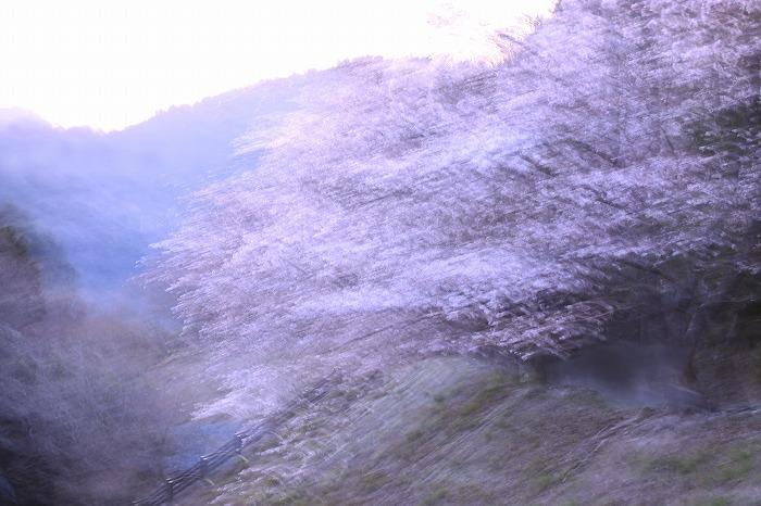 桜絵巻・・・_b0168041_19525187.jpg