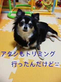 c0121141_0155068.jpg