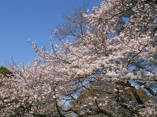 世田谷美術館の春:4月 6日_f0172744_22265272.jpg